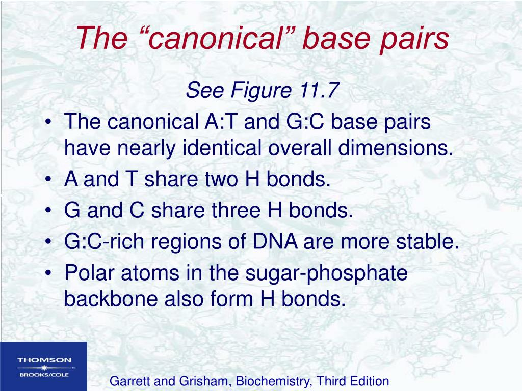 "The ""canonical"" base pairs"