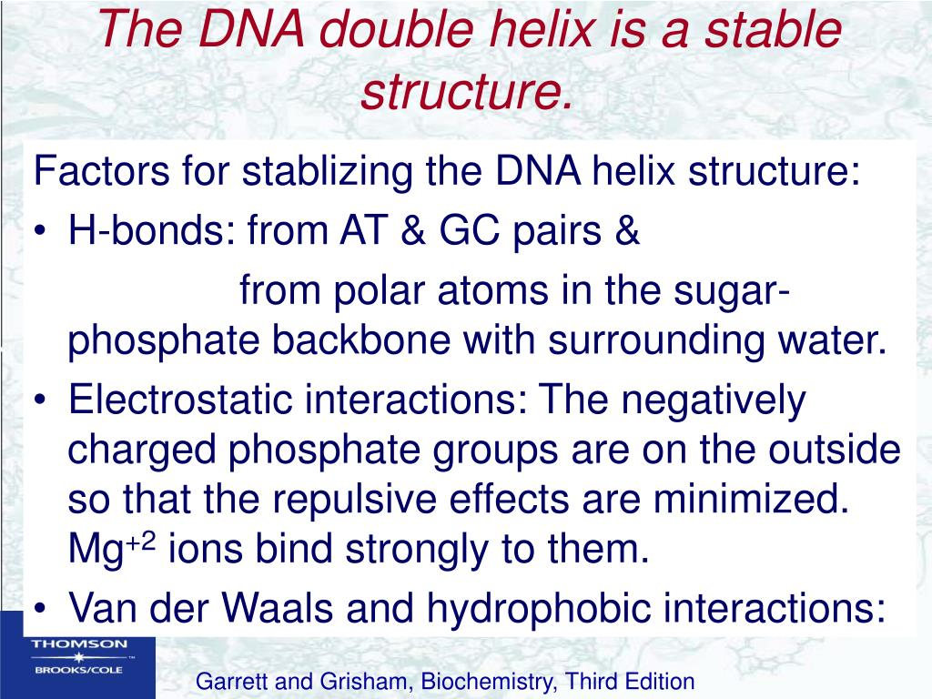 The DNA double helix is a stable structure.