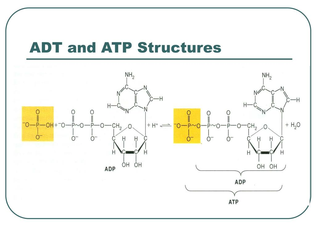 ADT and ATP Structures