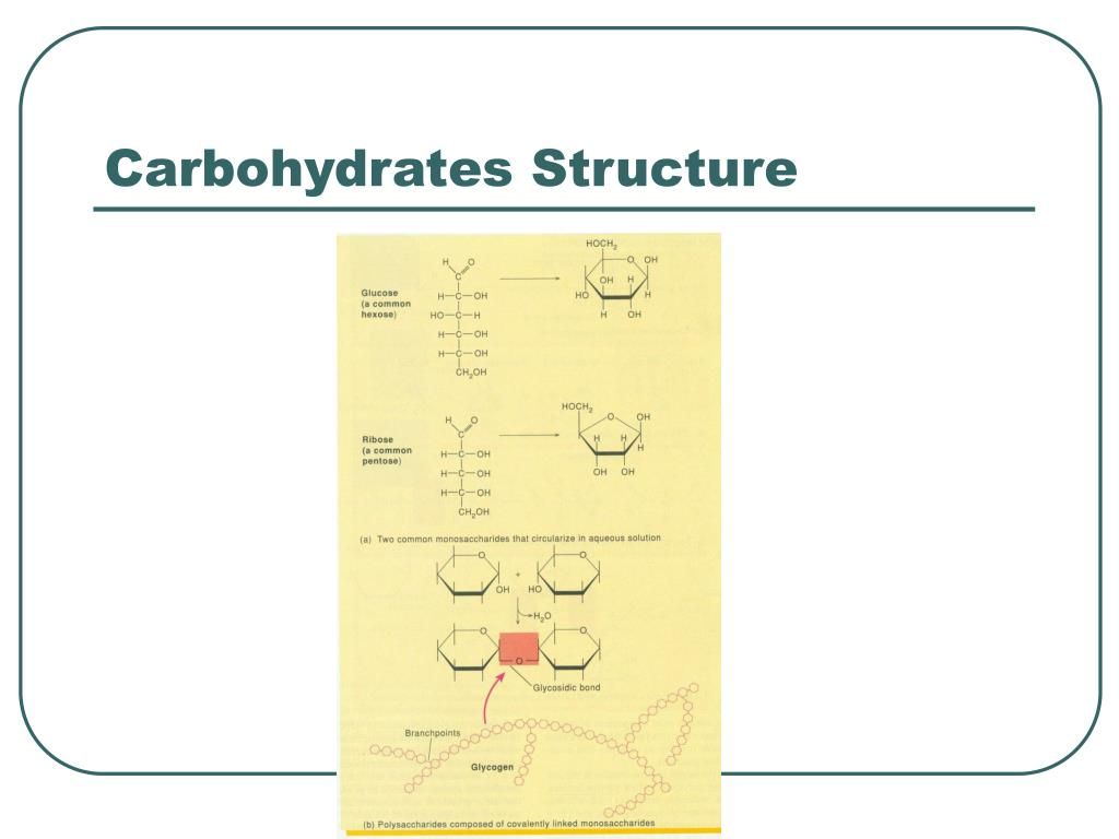 Carbohydrates Structure