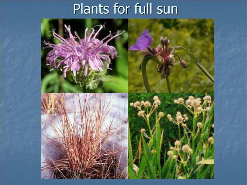 Plants for full sun