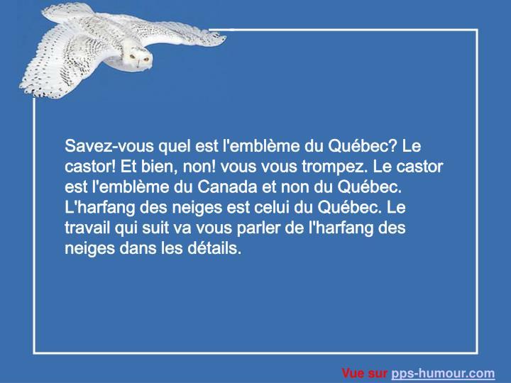 Savez-vous quel est l'emblème du Québec? Le castor! Et bien, non! vous vous trompez. Le castor est l'emblème du Canada et non du Québec. L'harfang des neiges est celui du Québec. Le travail qui suit va vous parler de l'harfang des neiges dans les détails.