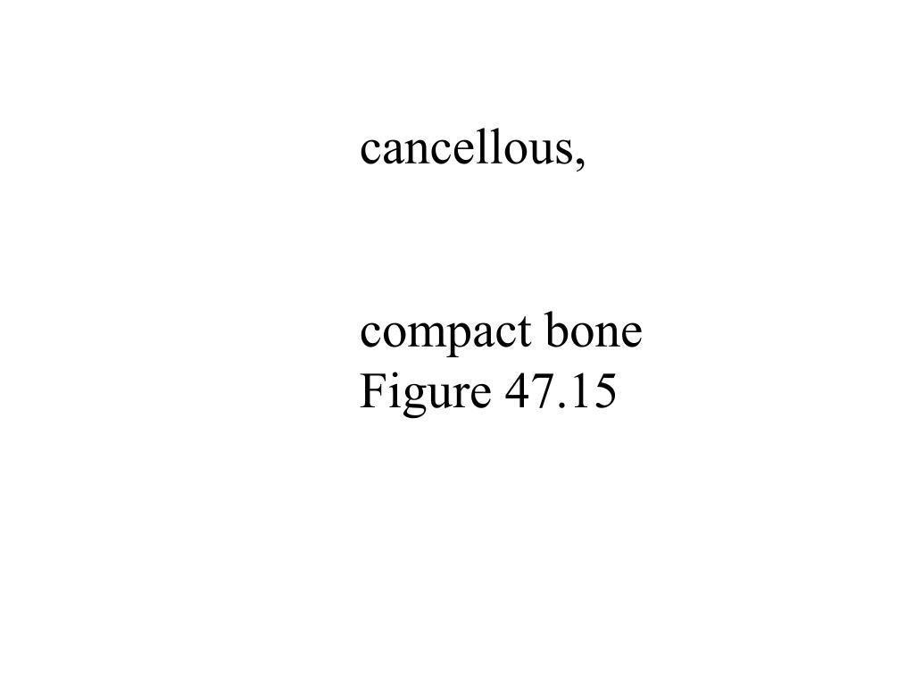 cancellous,