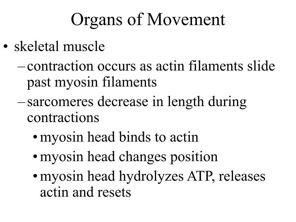 Organs of Movement