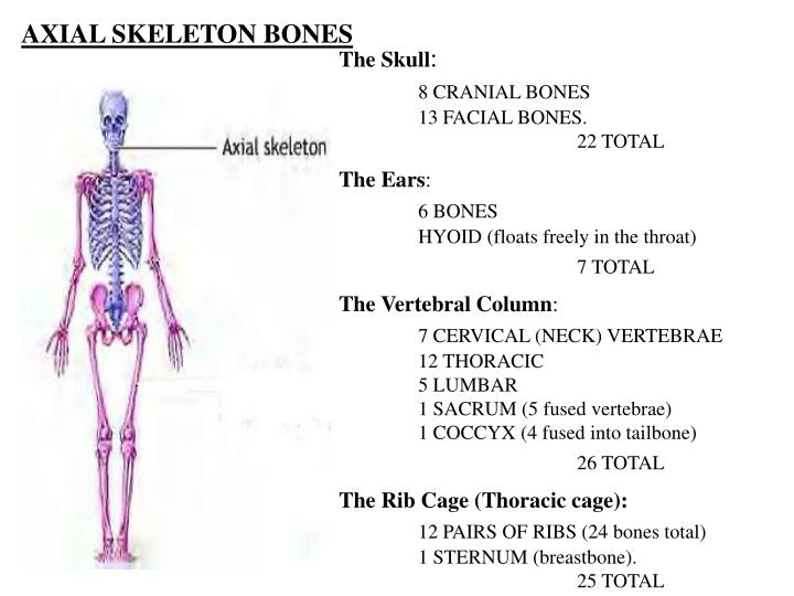 AXIAL SKELETON BONES
