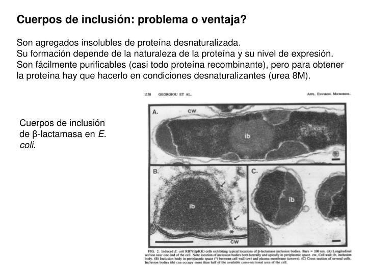 Cuerpos de inclusión: problema o ventaja?