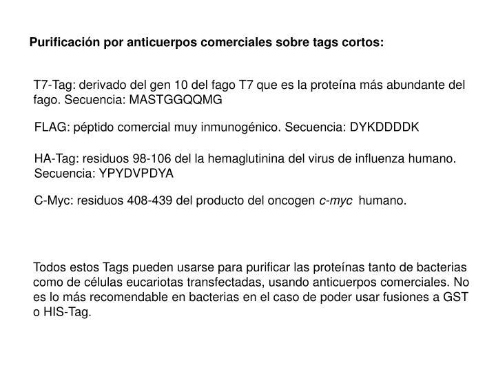 Purificación por anticuerpos comerciales sobre tags cortos:
