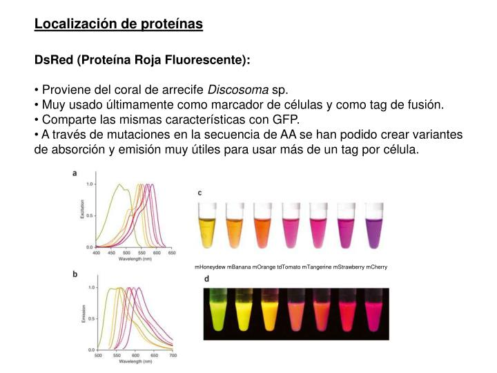 Localización de proteínas