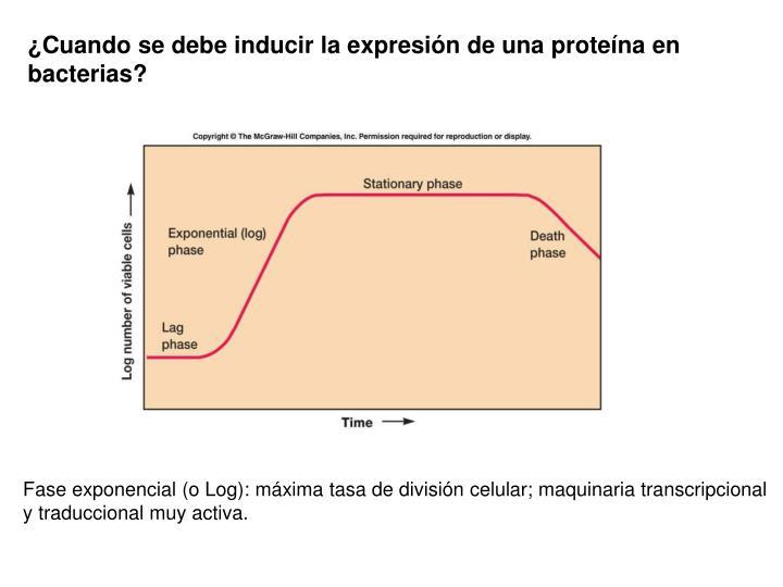 ¿Cuando se debe inducir la expresión de una proteína en bacterias?