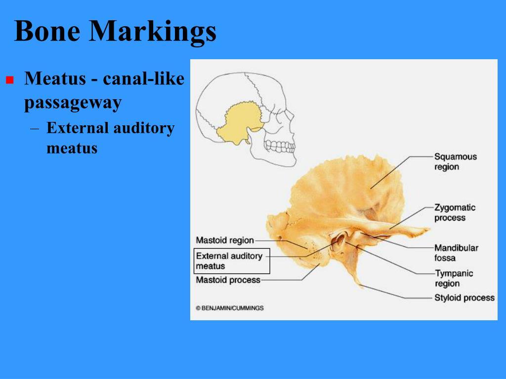 Bone Markings