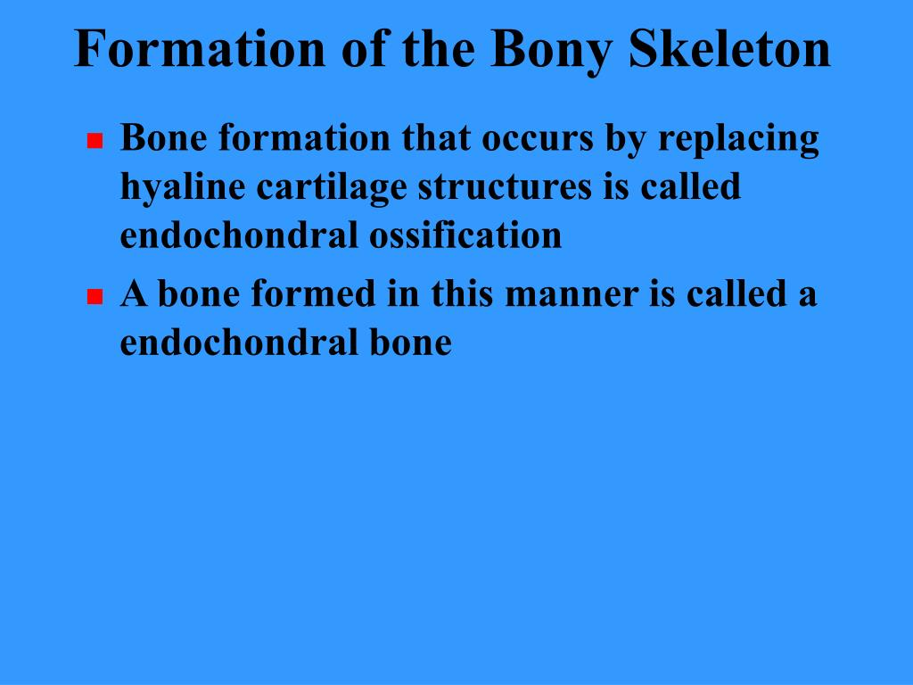 Formation of the Bony Skeleton