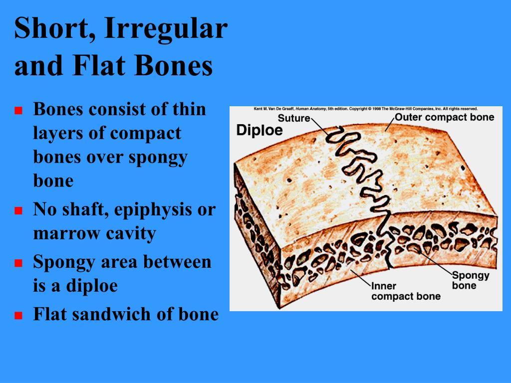 Short, Irregular and Flat Bones