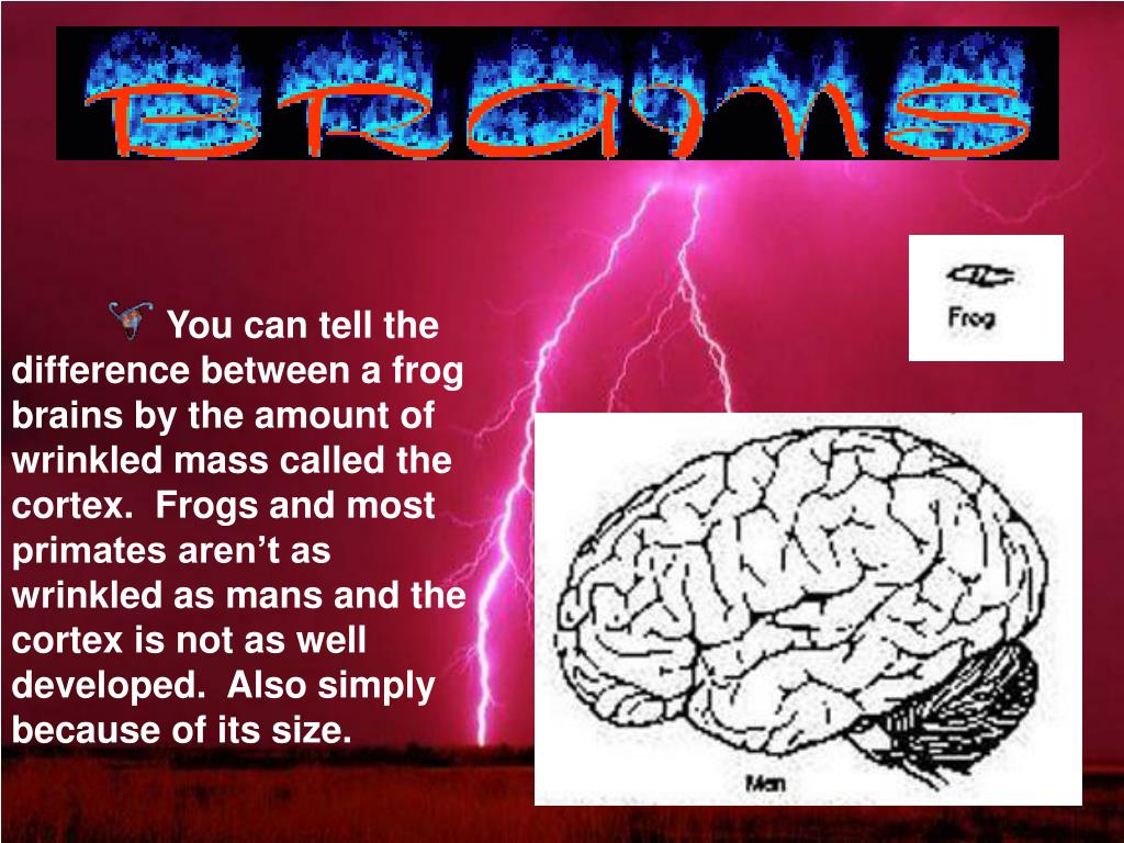 You can tell the difference between a frog brains by the amount of wrinkled mass called the cortex.  Frogs and most primates aren't as wrinkled as mans and the cortex is not as well developed.  Also simply because of its size.