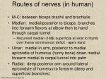 routes of nerves in human