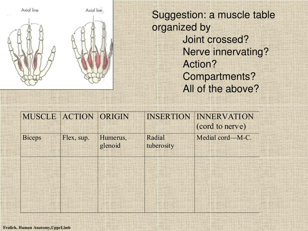 Suggestion: a muscle table organized by