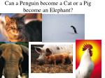 can a penguin become a cat or a pig become an elephant