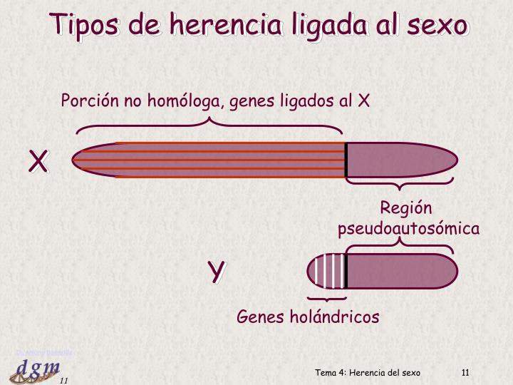 Porción no homóloga, genes ligados al X