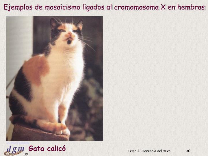 Ejemplos de mosaicismo ligados al cromomosoma X en hembras