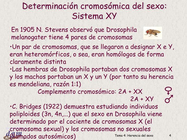 Determinación cromosómica del sexo: Sistema XY