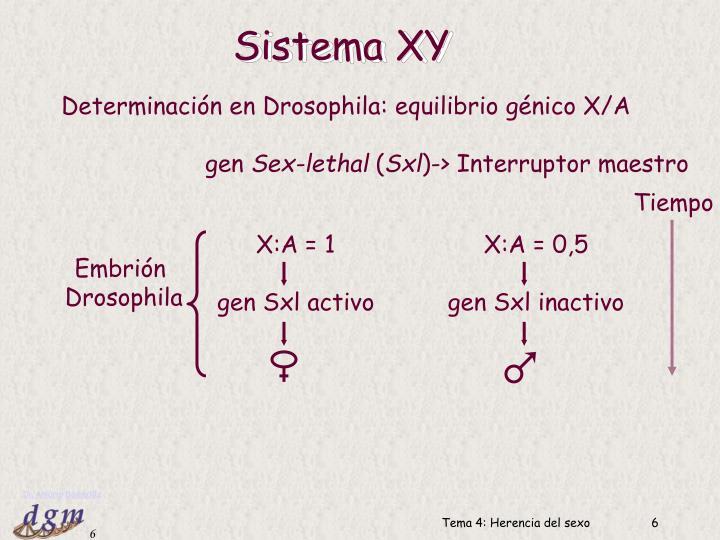 Sistema XY