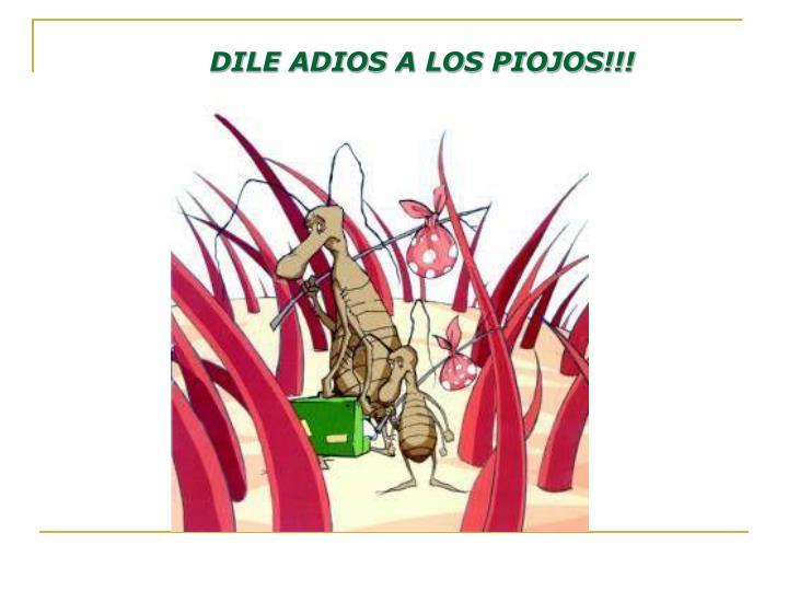 DILE ADIOS A LOS PIOJOS!!!