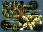 ecological damage7