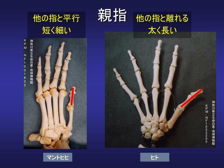 他の指と平行
