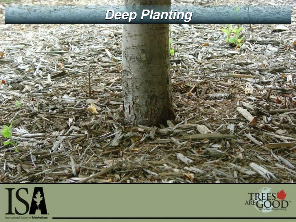 Deep Planting