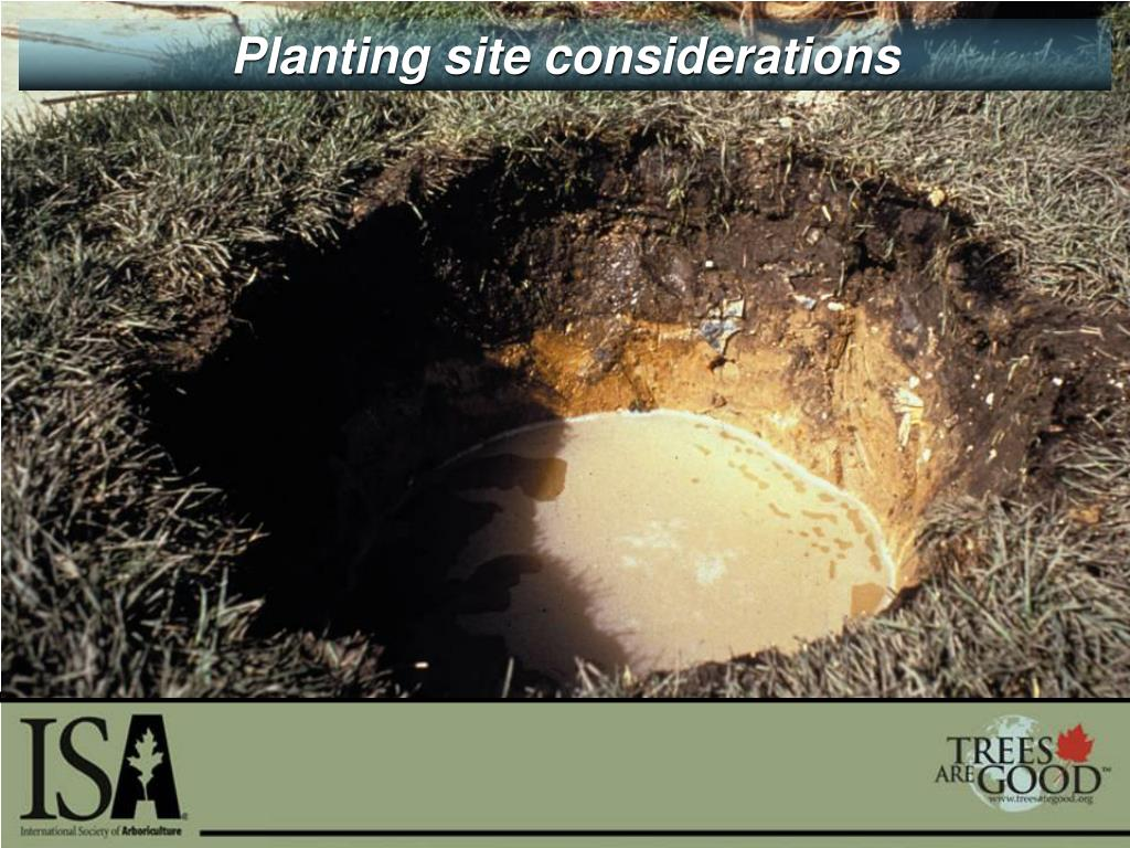 Planting site considerations