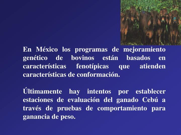 En México los programas de mejoramiento genético de bovinos están basados en características fenotípicas que atienden características de conformación.