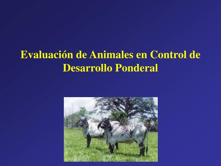 Evaluación de Animales en Control de Desarrollo Ponderal
