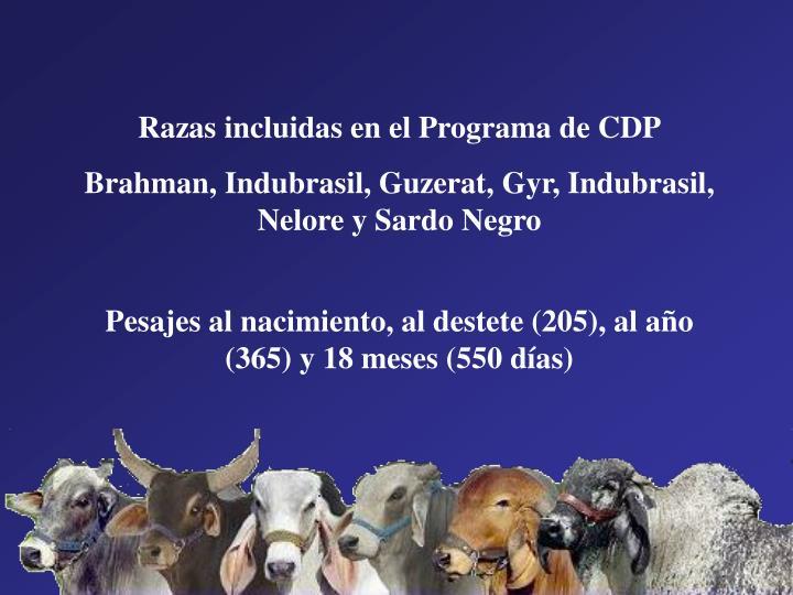 Razas incluidas en el Programa de CDP