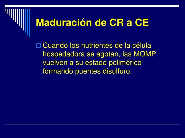 Maduración de CR a CE