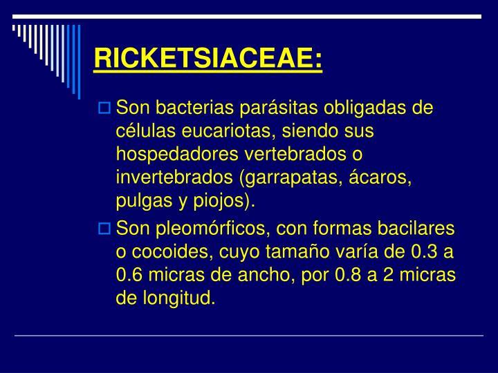 RICKETSIACEAE:
