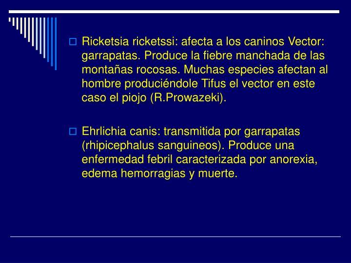 Ricketsia ricketssi: afecta a los caninos Vector: garrapatas. Produce la fiebre manchada de las montañas rocosas. Muchas especies afectan al hombre produciéndole Tifus el vector en este caso el piojo (R.Prowazeki).