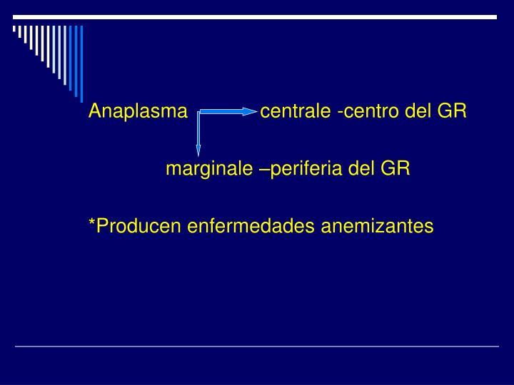 Anaplasma             centrale -centro del GR