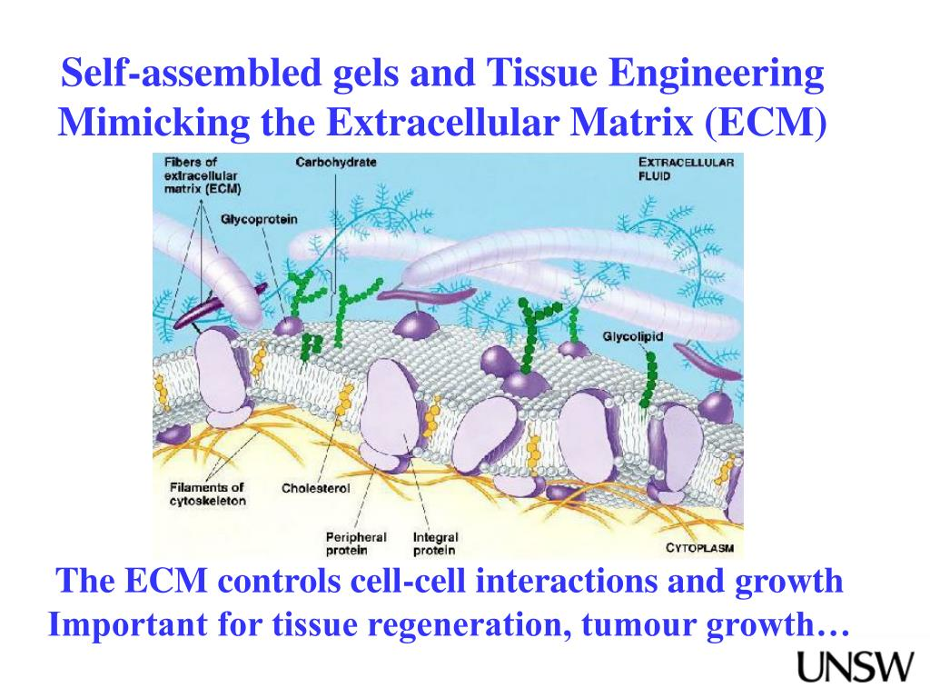 Self-assembled gels and Tissue Engineering