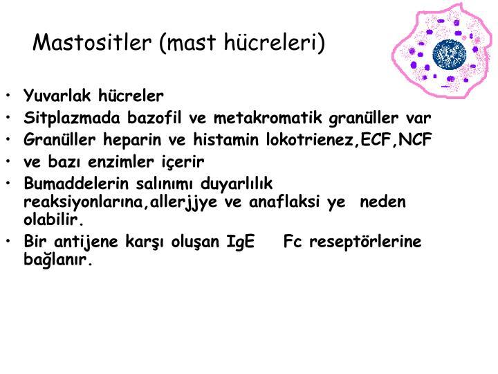 Mastositler (mast hücreleri)