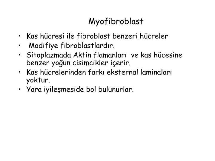 Myofibroblast