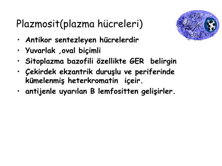 Plazmosit(plazma hücreleri)