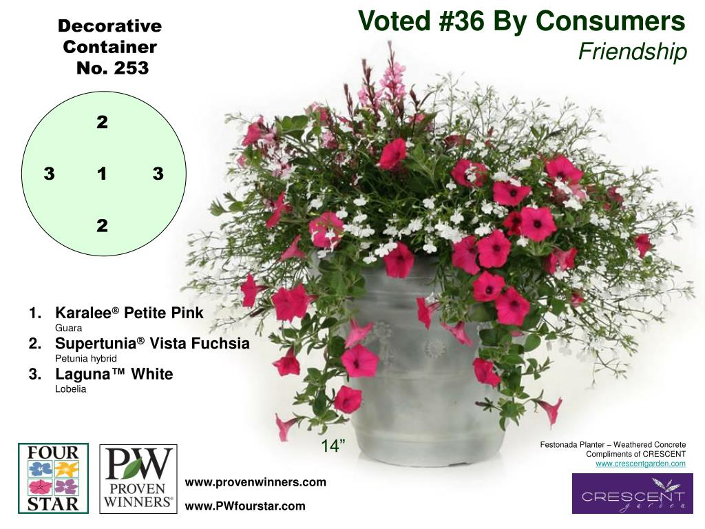 Voted #36 By Consumers