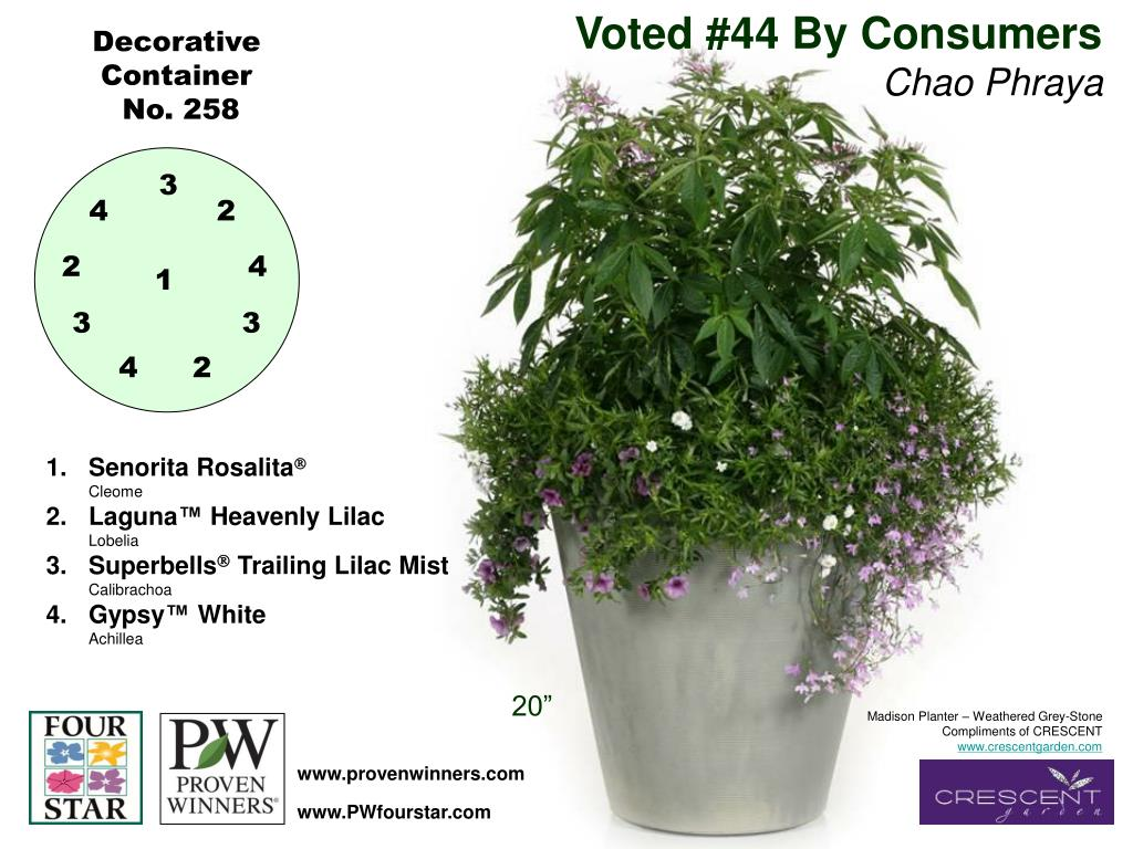 Voted #44 By Consumers