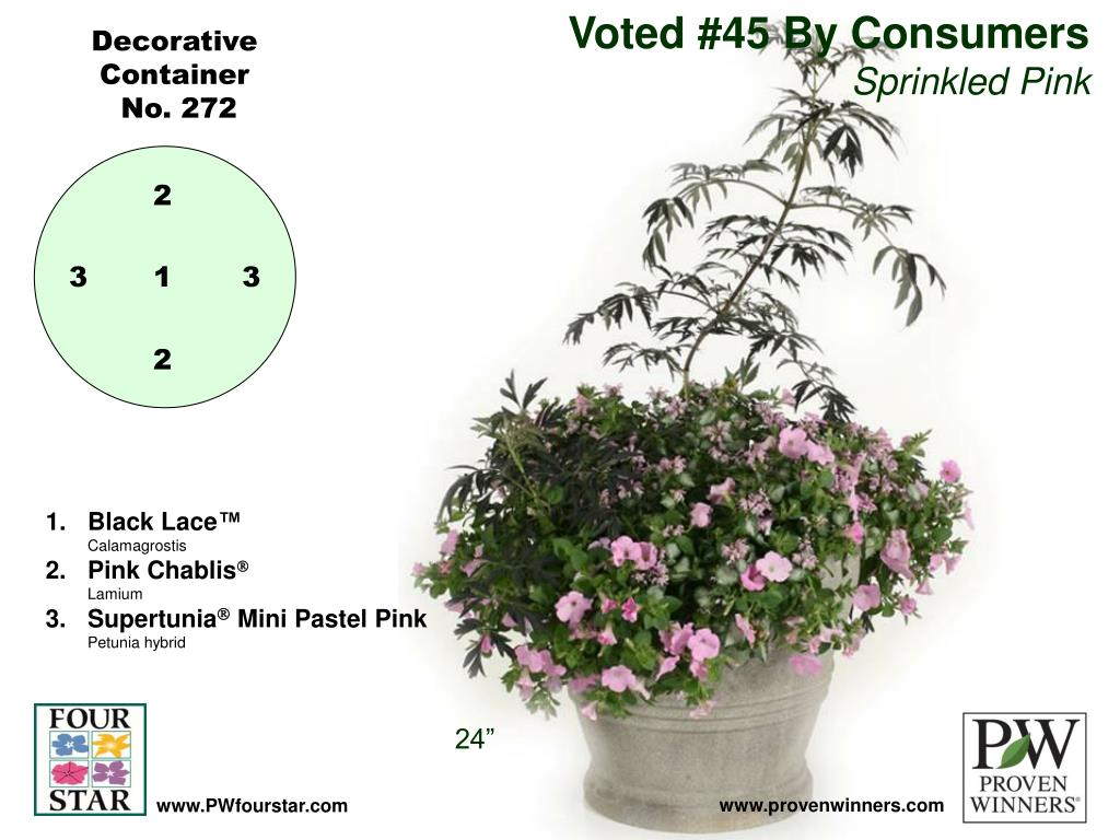 Voted #45 By Consumers