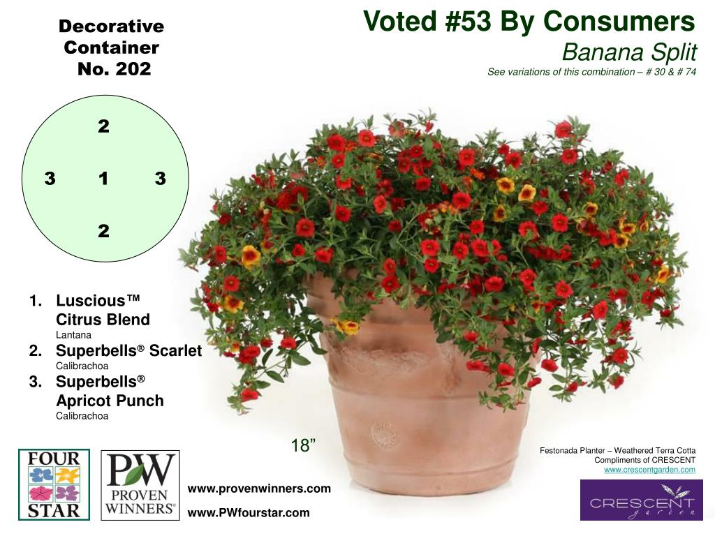 Voted #53 By Consumers