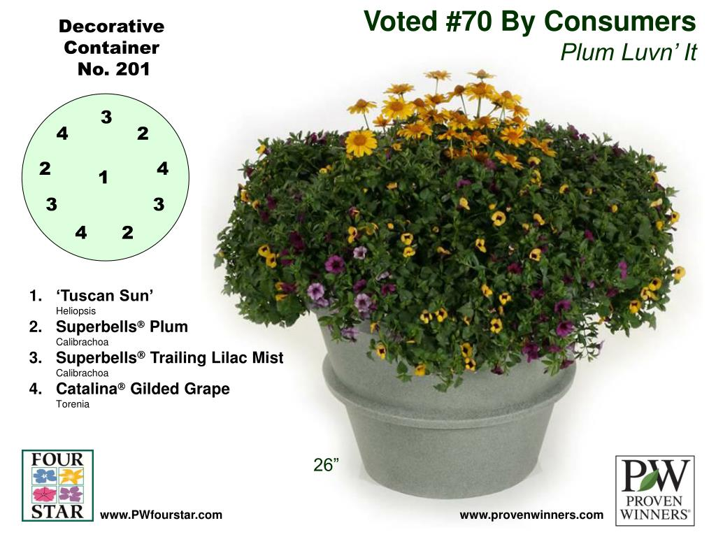 Voted #70 By Consumers