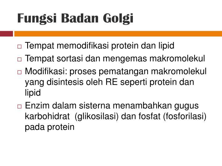Fungsi Badan Golgi