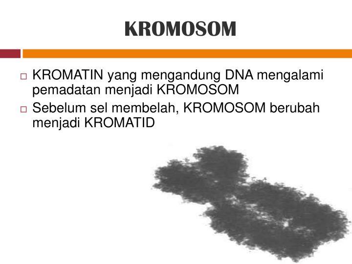 KROMATIN yang mengandung DNA mengalami pemadatan menjadi KROMOSOM