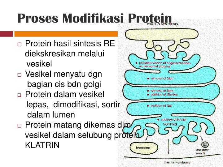 Proses Modifikasi Protein