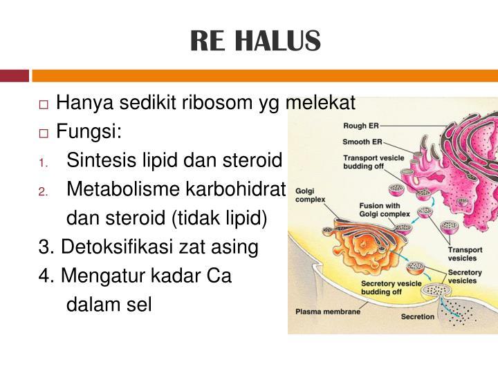 RE HALUS