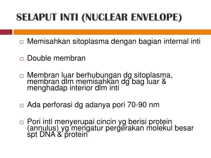 SELAPUT INTI (NUCLEAR ENVELOPE)